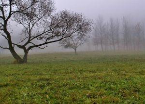 655377_autumn_fog_2