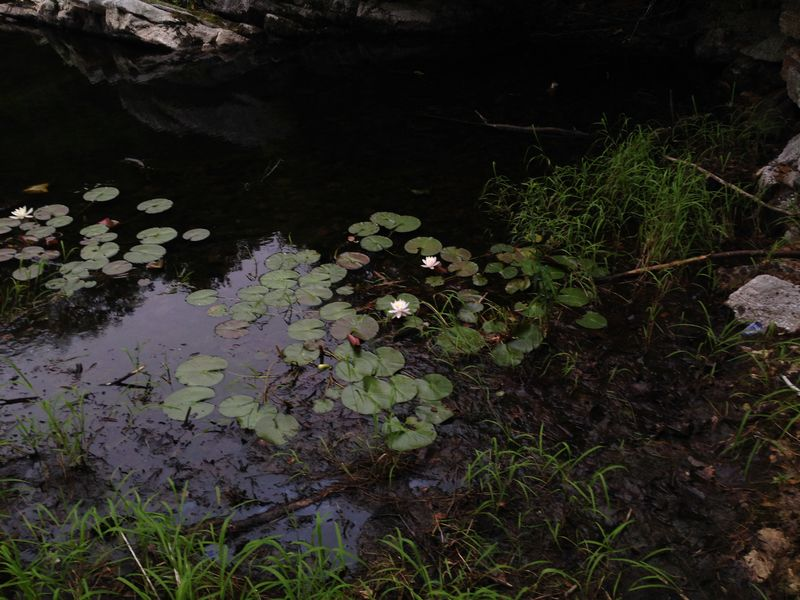 Mohonk12a LilyPad2