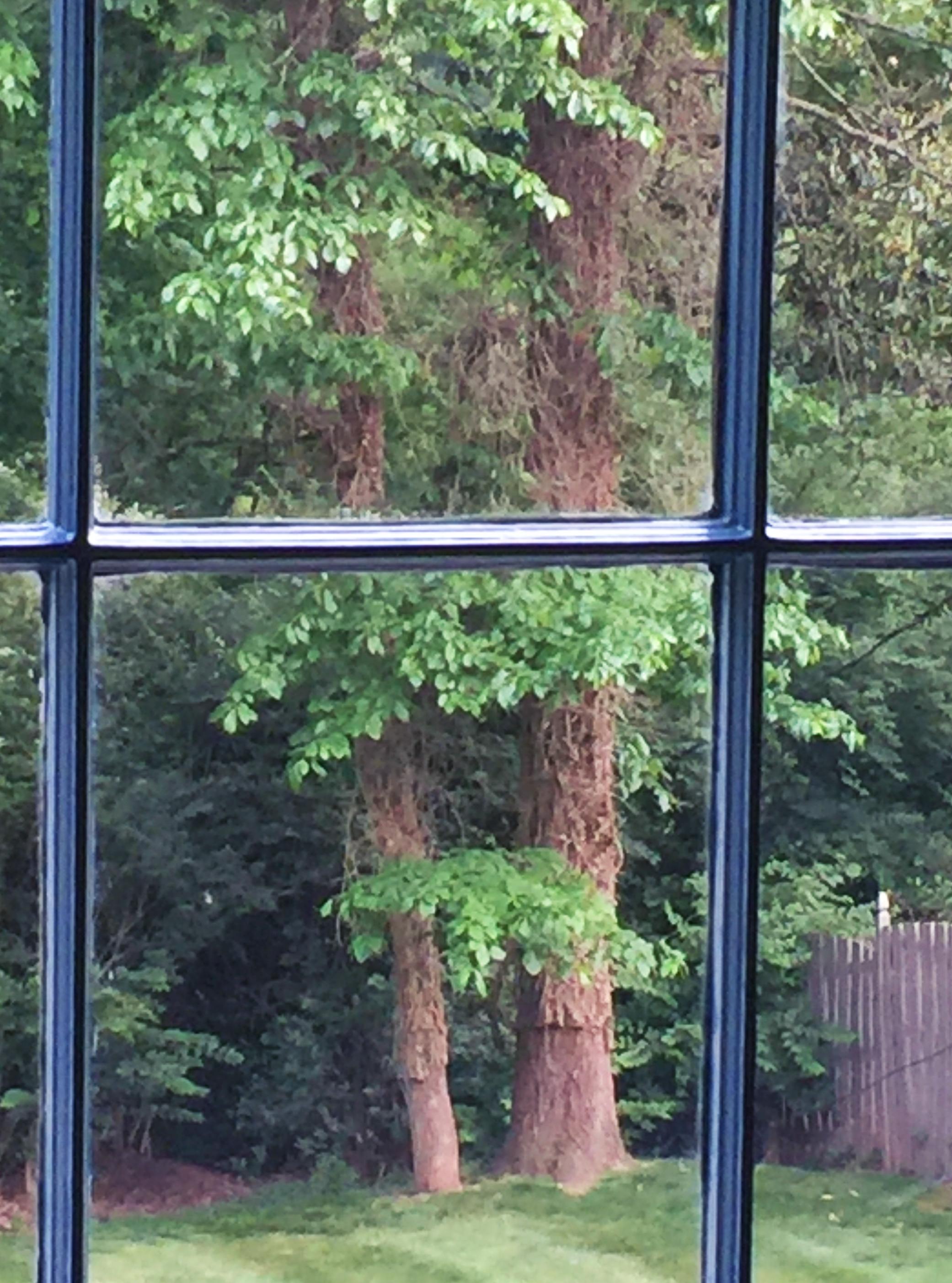 Trees of Life - restingmotion