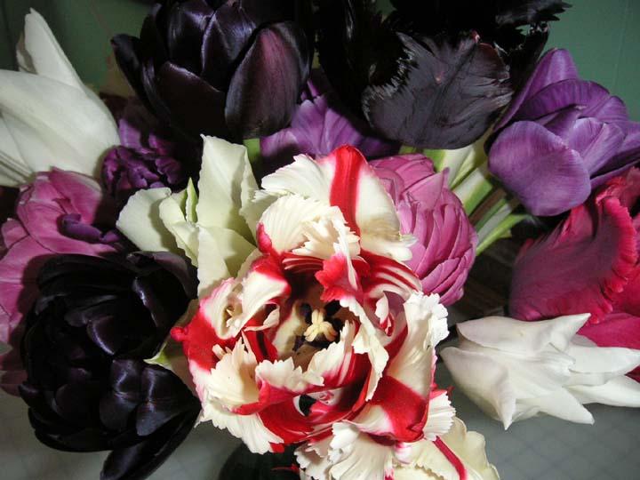 Tulipsb3